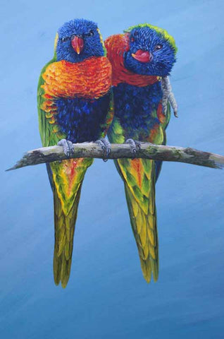 Rainbow Lorikeets limited edition print
