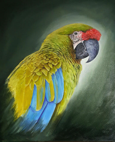 Limited_edition_parrot_art_print_great_green_macaw
