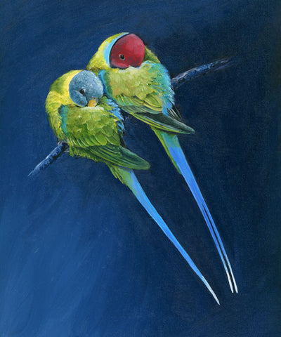 Limited_edition_parrot_art_print_plum_headed_parakeets
