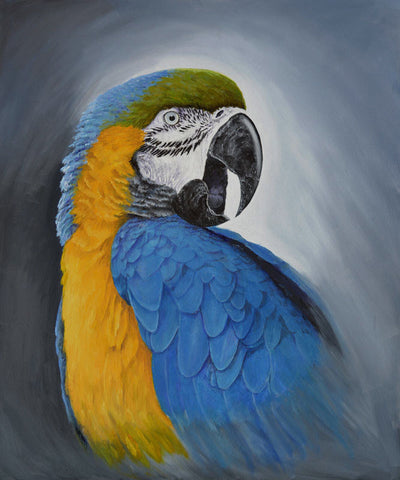 Limited_edition_parrot_art_print_blue_gold_macaw