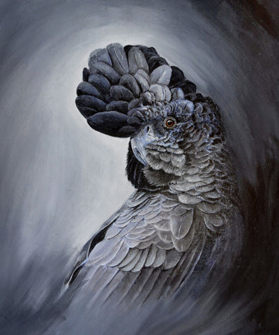 Limited_edition_parrot_art_print_red_tailed_black_cockatoo