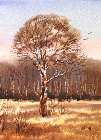 Silver Birch. Original watercolour