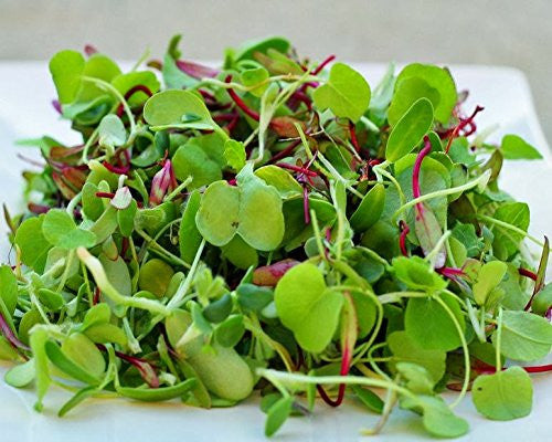 Certified Non-GMO Microgreen Seeds - Sweet Lettuce Mix (2oz (40000+seeds))