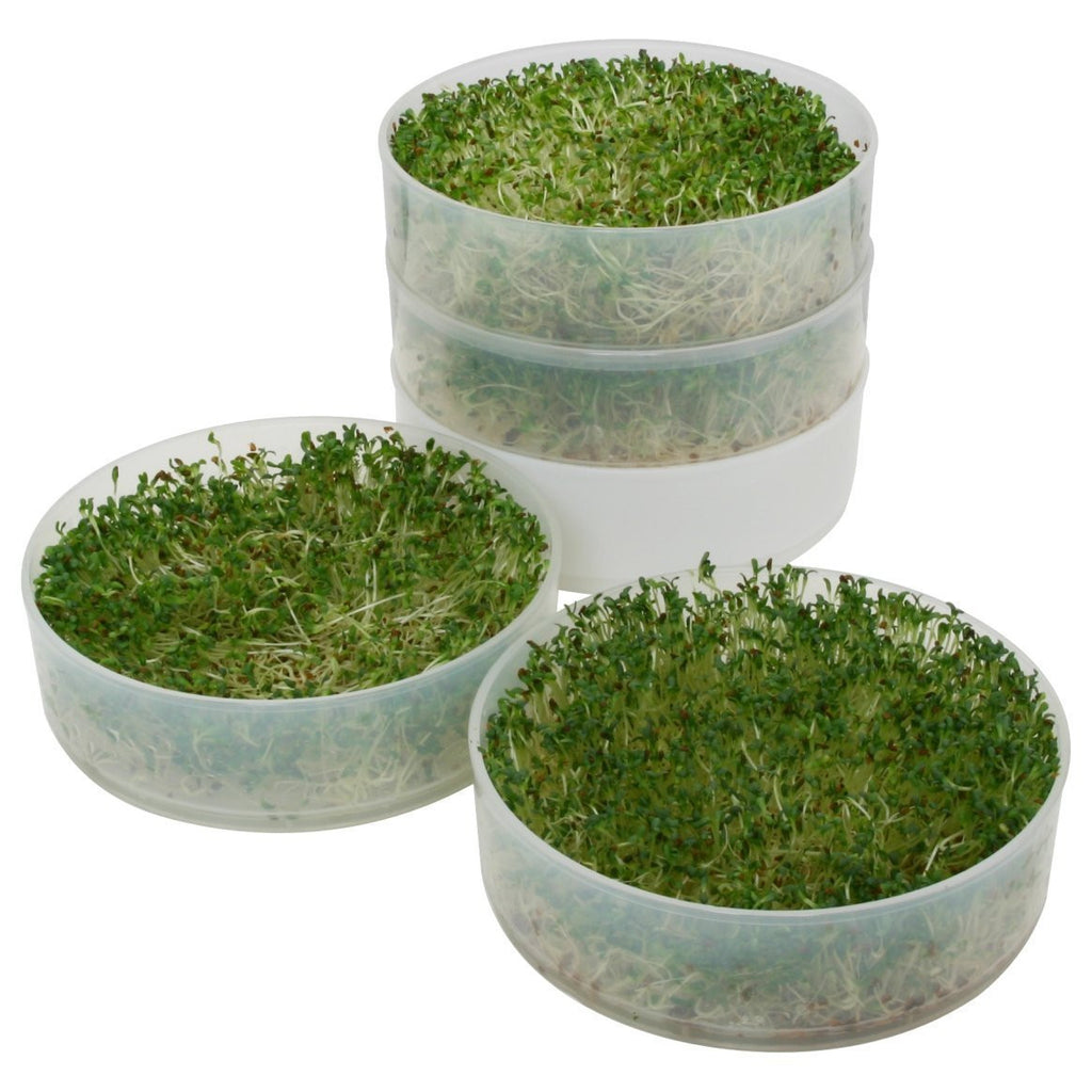 Sprouting Kit *with seeds* - 4-tray Sprouter and Sprouting Seeds (3 Types of Seeds) Ready to grow the best salad!