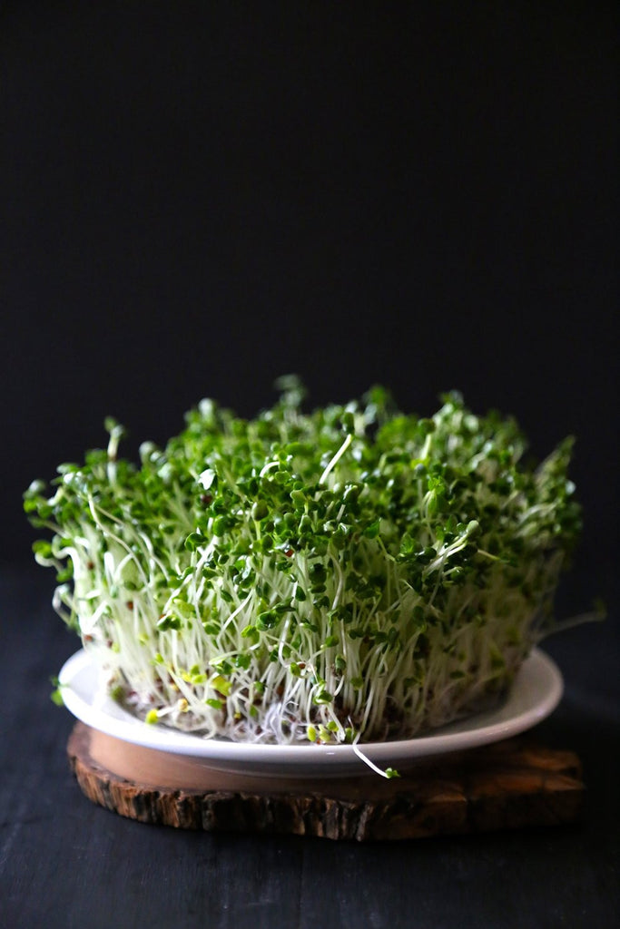 Certified Non-GMO Broccoli Seeds For Sprouting Sprouts Microgreens (8oz (40000+seeds))