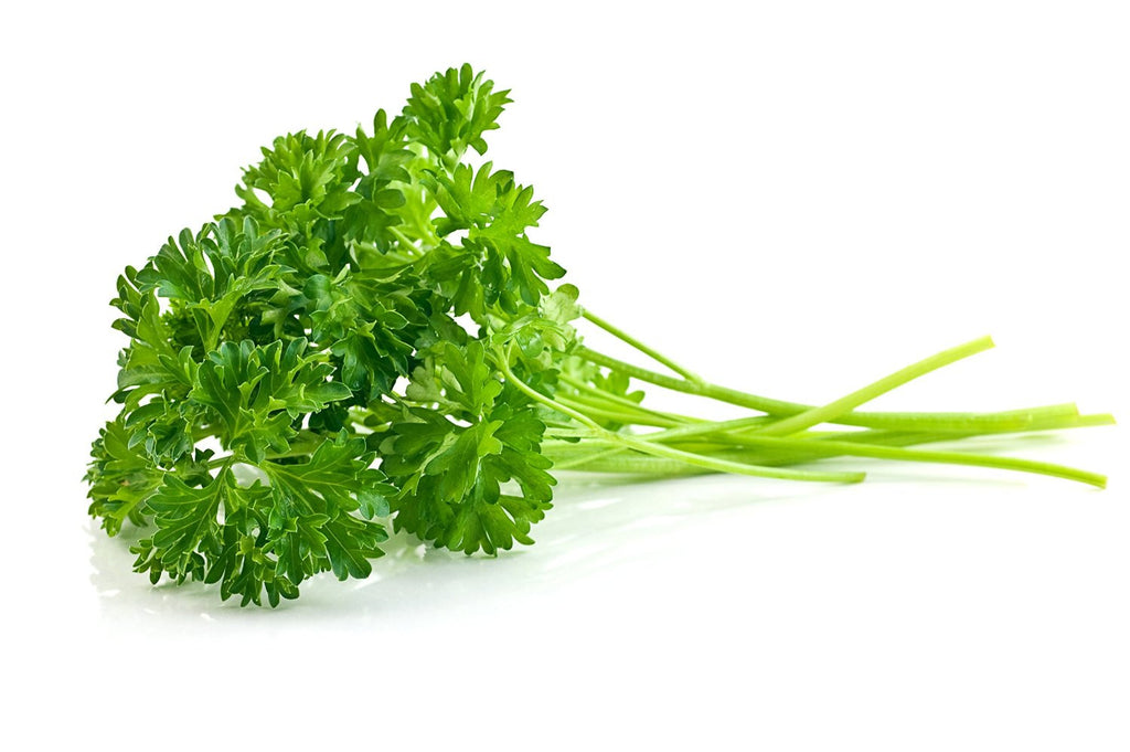 parsley seeds microgreens sprouting 300 seeds 5 gallon bucket
