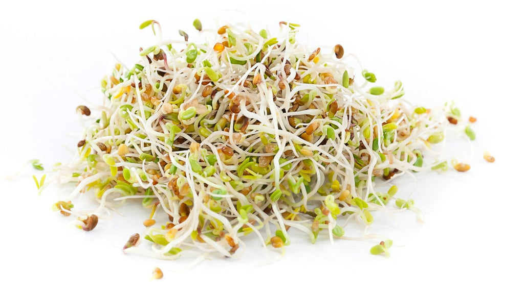 Certified Non-GMO Alfalfa for Sprouting - Healthy Sprouts (1lb - Organic)
