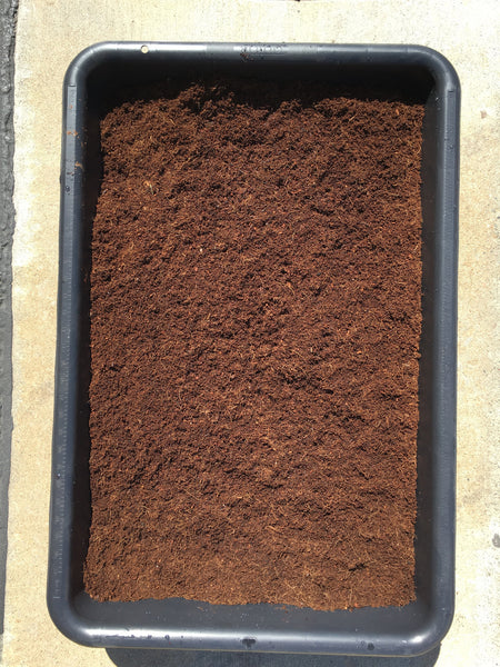 Nature's Coco Coir Brick - Premium Quality Compressed - 2.0 lbs - 1 Brick - Potting mixes, Hydrophonics, Nursery, Home gardening, Worm bedding Use - Nature's Agro Products - 3