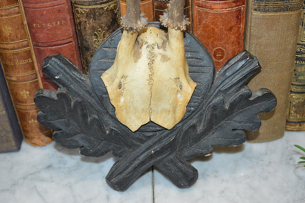 Antique German Deer Antler Trophy Mount Black Forest Shield Carved Wood Plaque
