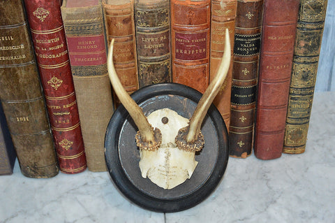 Antique 1891 Deer Antlers Hunt Trophy Mount German Stag Wood Plaque