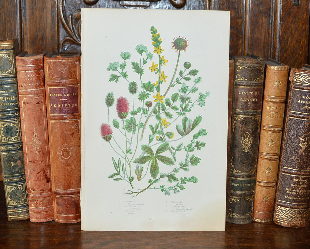 Antique Floral Botanical Print Book Plate Page - Antique Flea Finds