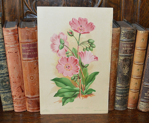 Antique Pink Floral Botanical Print Book Plate Page - Antique Flea Finds - 1