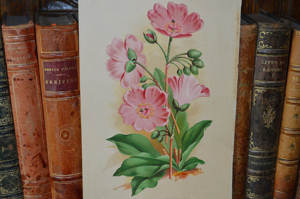 Antique Pink Floral Botanical Print Book Plate Page - Antique Flea Finds - 2