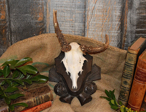 Vintage Black Forest German Deer Antler Trophy Mount Carved Wood Abnormal