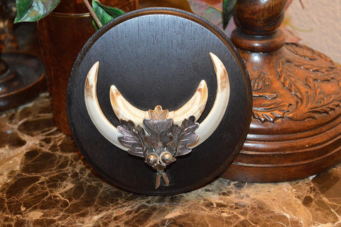 Vintage German Wild Boar Hog Trophy Mount on Wood Plaque