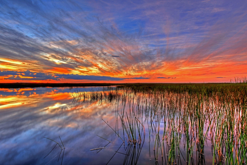 "Saving the Everglades – Florida's ""River of Grass"""