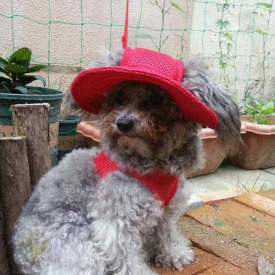 Dog/Cat Princess Canvas Mesh Strap Hat