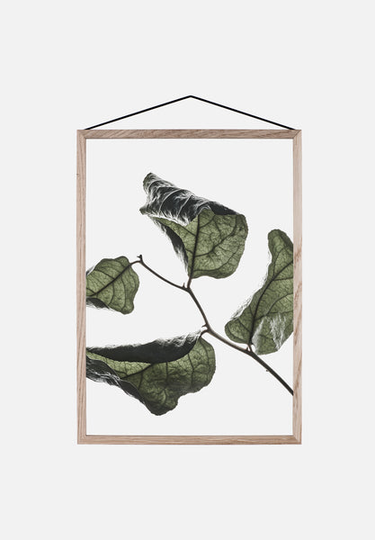 Floating Leaves — Large