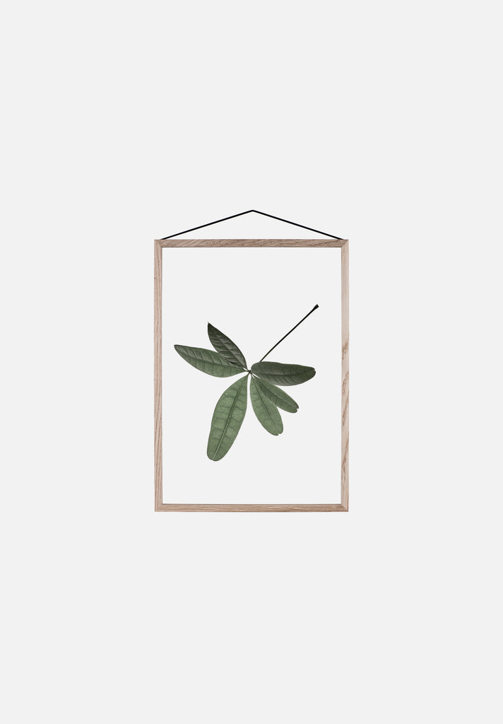 Floating Leaves — Small
