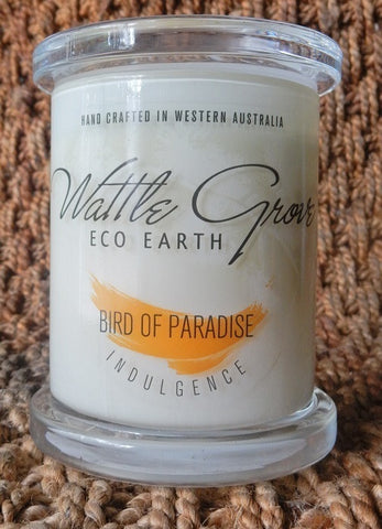WATTLE GROVE CANDLE BIRD OF PARADISE MEDIUM