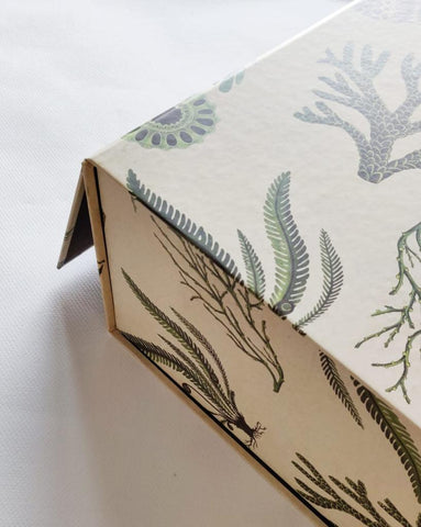 Fern Collapsible Gift Box