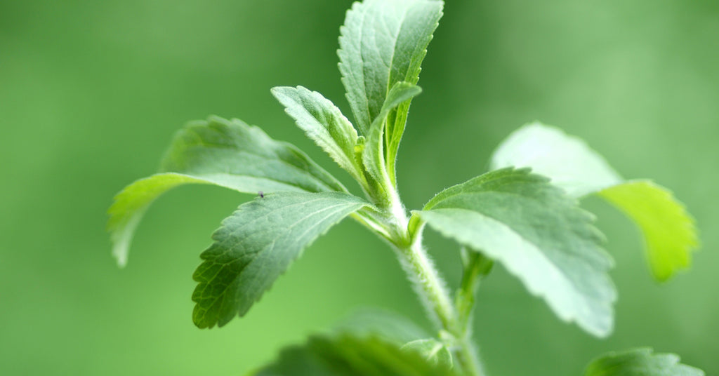what is the difference between stevia and sucralose