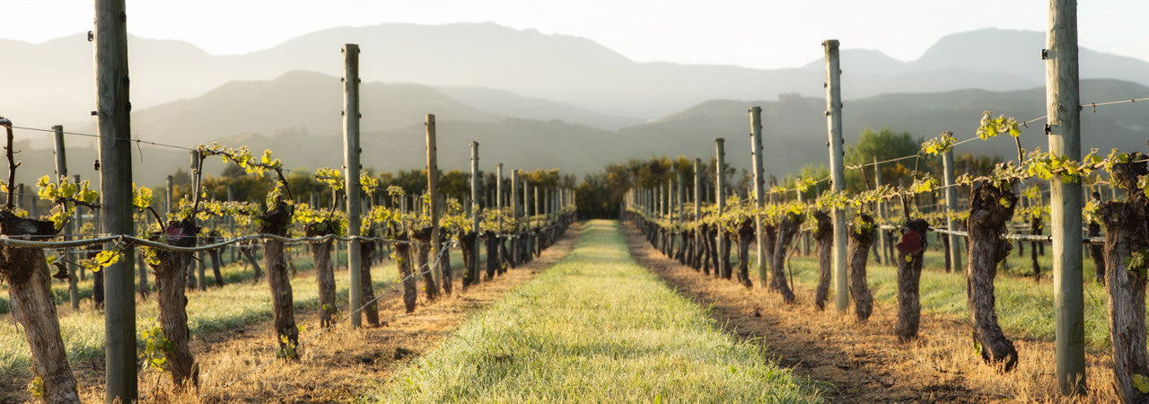 Middle Earth Vineyard - Nelson