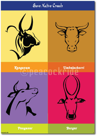 Jallikattu - Save Native Breeds Poster/Frame
