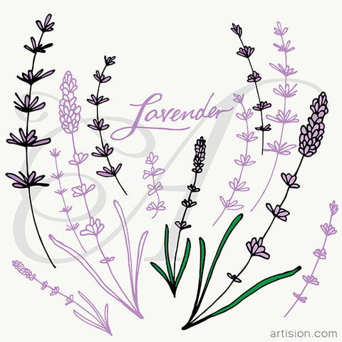 Lavender Handdrawn Vector
