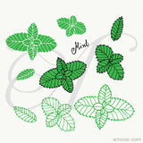 Mint Herb Hand Drawn Vector
