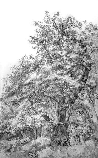 Lot 2B: Hampstead Chestnut Tree, Natasha Lien (London)