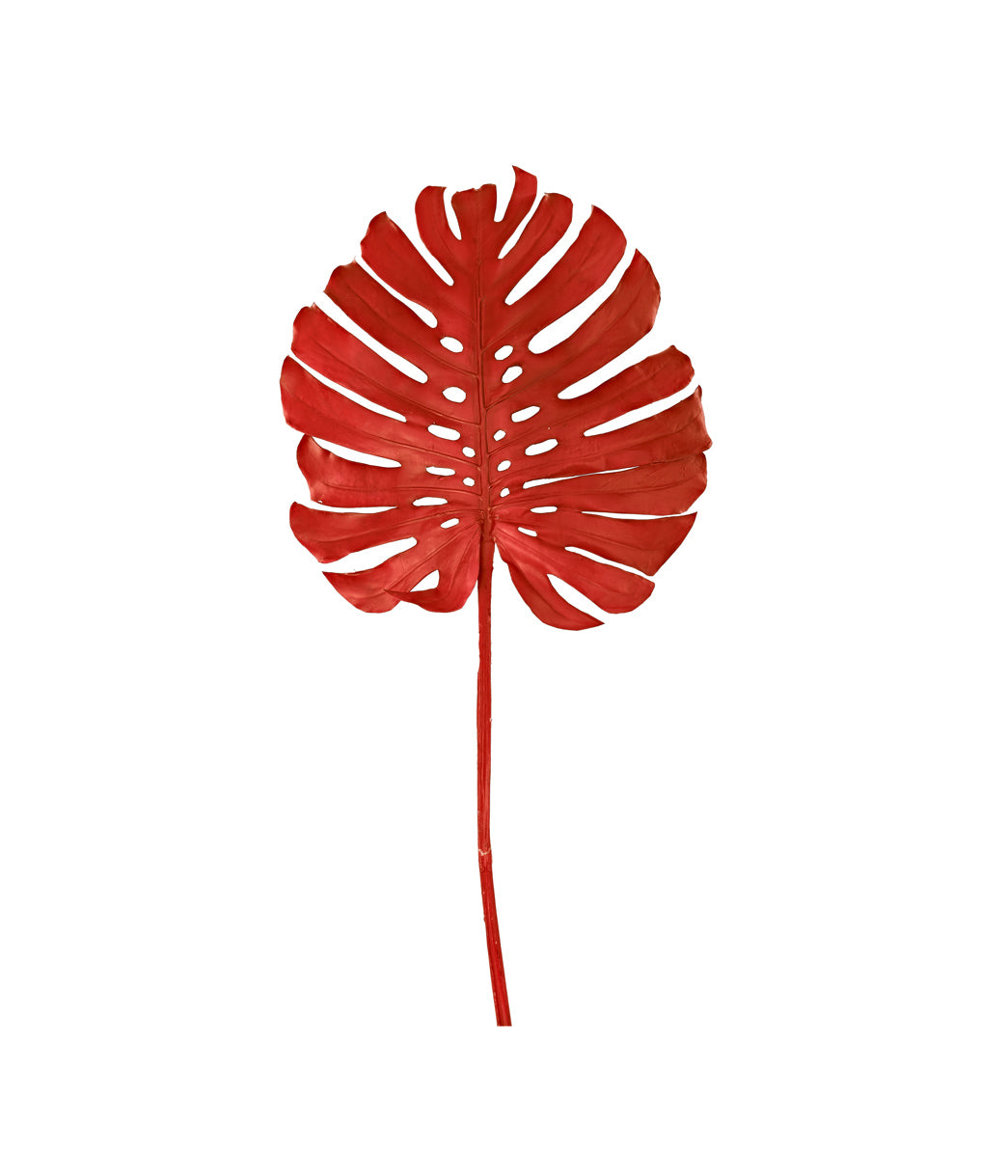 Monstera leaf red