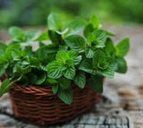 Mint Leaf Fragrance