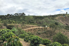 Colombia - Tolima Sugarcane - Decaffeinated