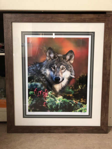 Wolf Photo - Framed