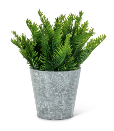 "Abbott- Fern Leaf Plant Pot 7""H"