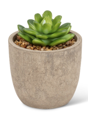 Abbott- Large Succulent in Pot 4""