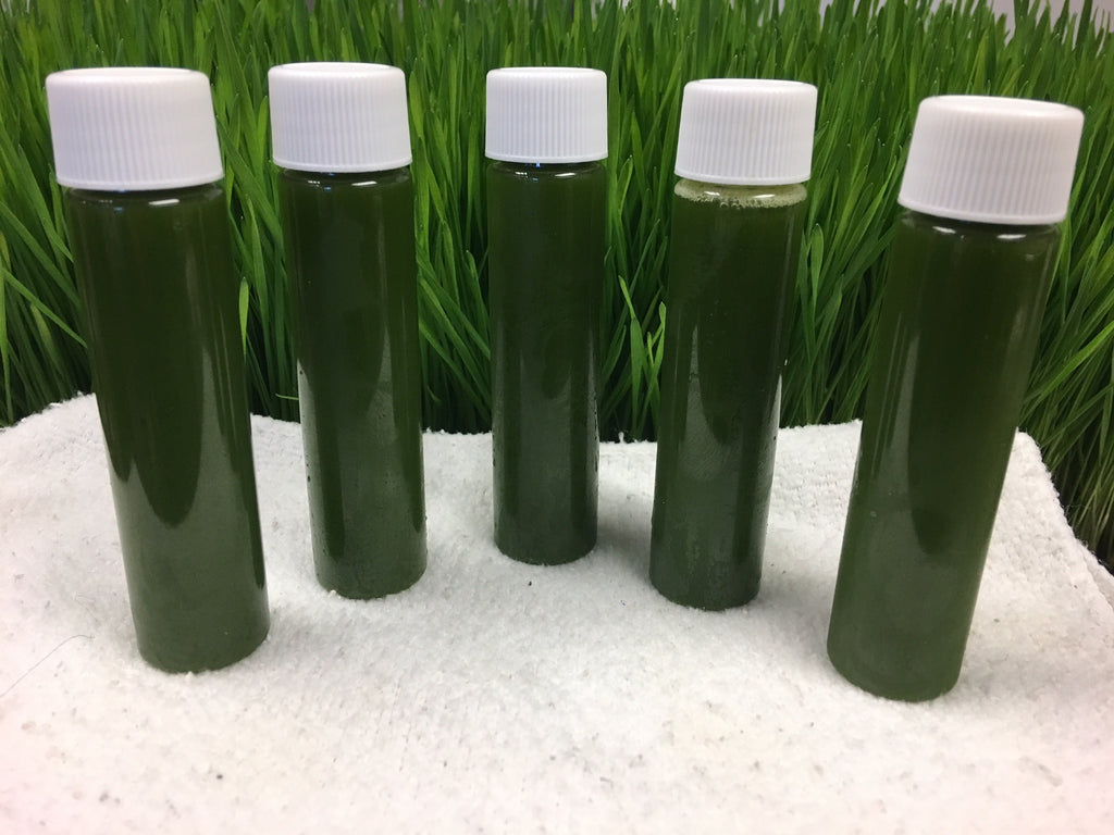"Wheat Grass ~ ""Sweet Grass"" - organic 5 pack"