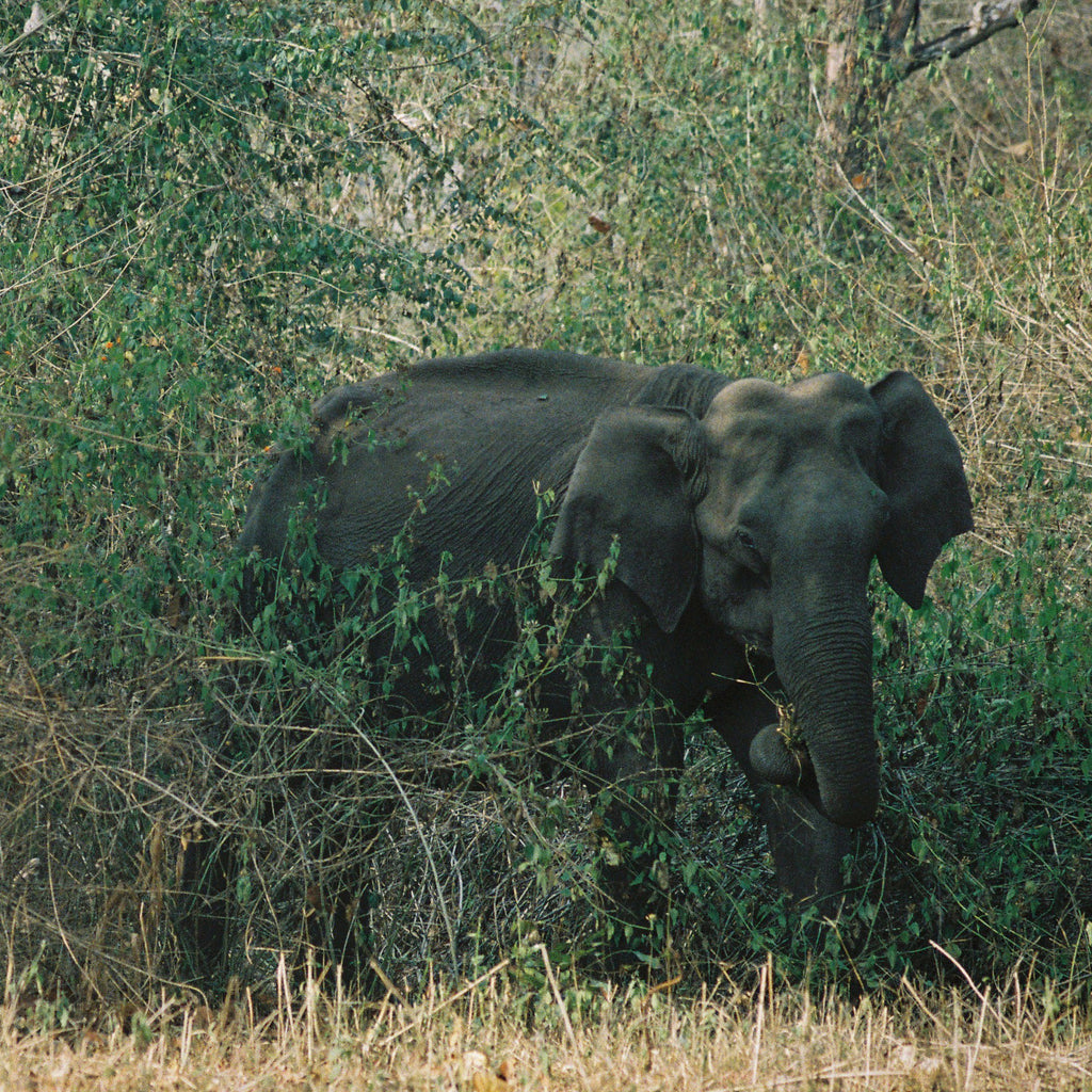 90/10: Wildlife Sightings at Nagarhole National Park