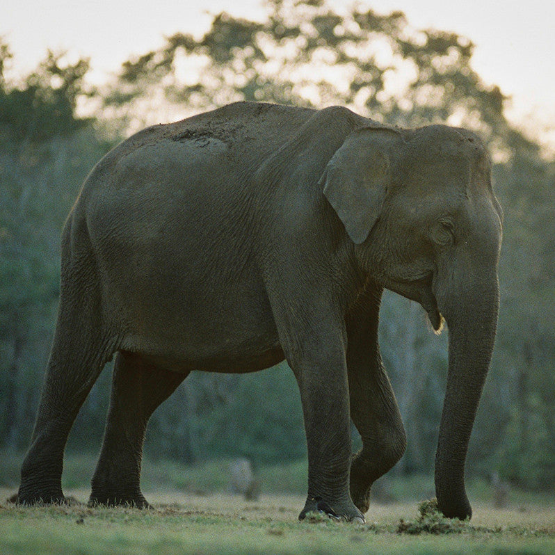 90/10: Wild Elephant Safari at Nagarhole National Park