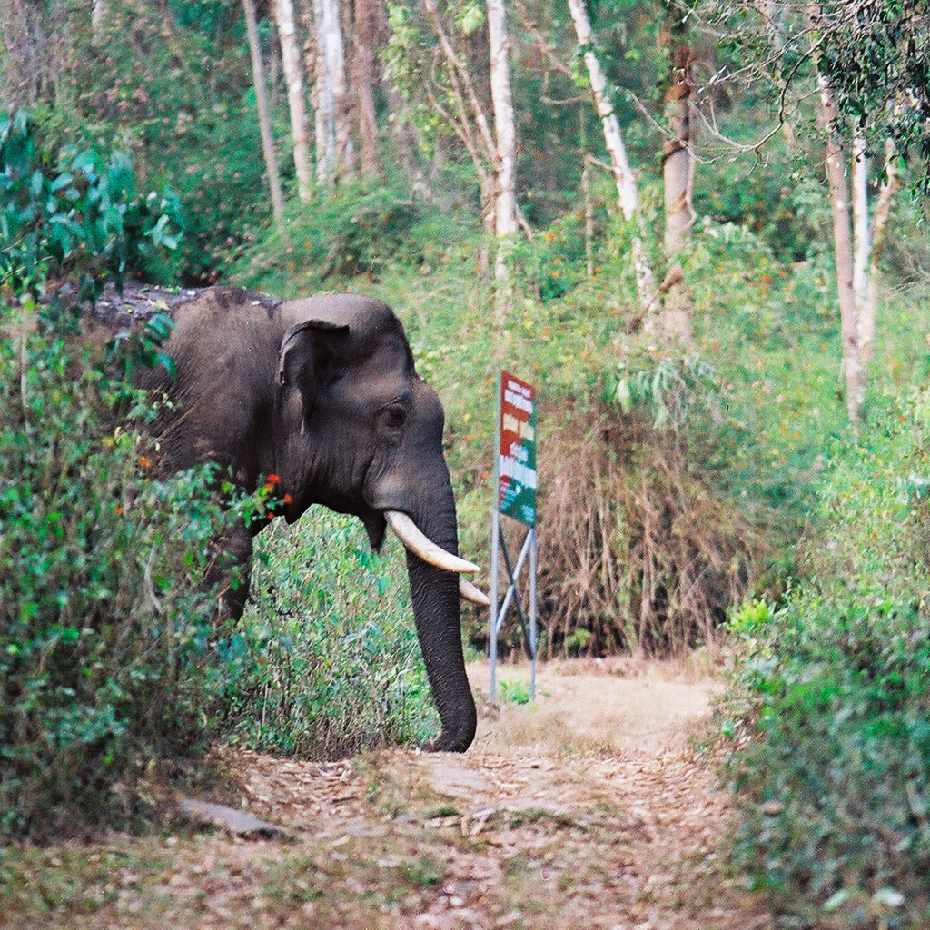 90/10: Exploring the Kerala Elephant Corridor