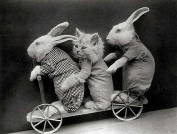 Dressed up bunnies Riding a cart with a cat?