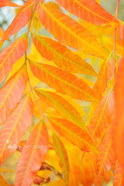 Autumn Amber - Nature Photography