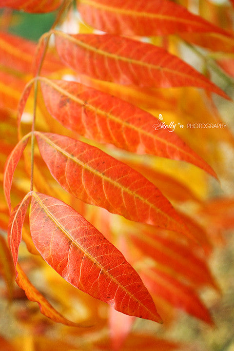 Autumn Flame - Nature Photography