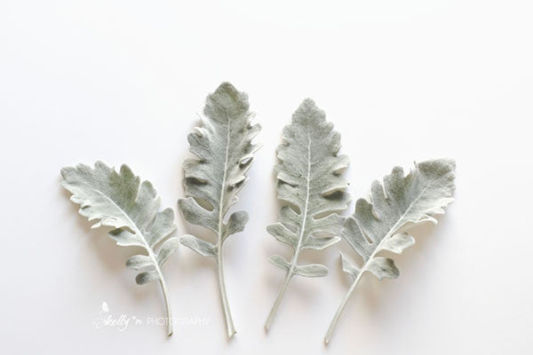Dusty White - Botanical Still Life