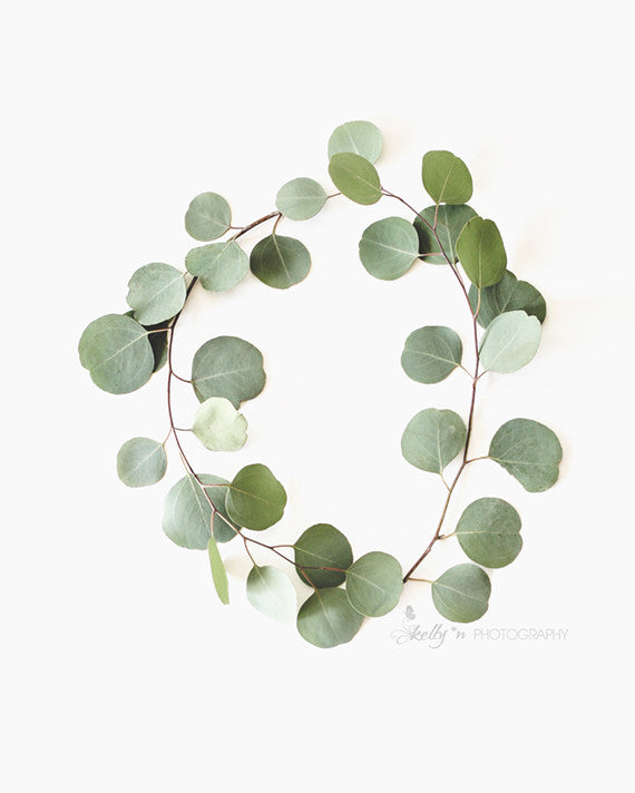 Eucalyptus Circle - Botanical Still Life