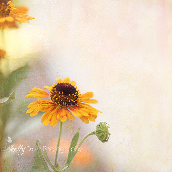 Helenium 1 - Flower Photography