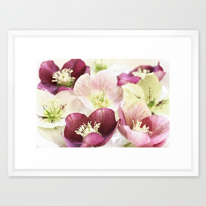 Hellebores - Flower Photography