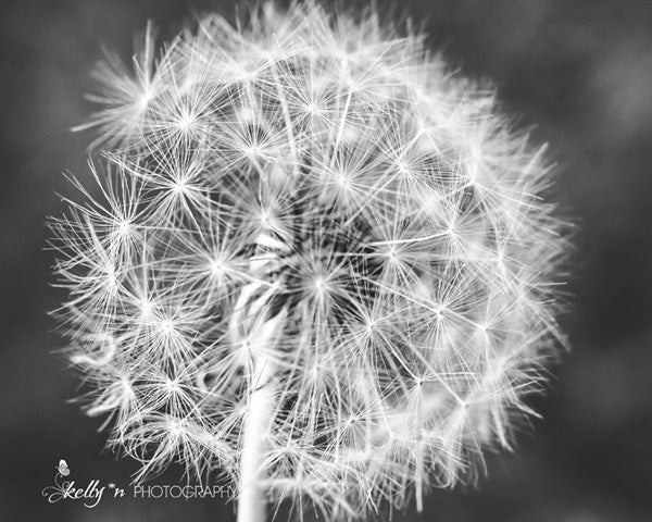 It's a Dandy - Black and White Photography