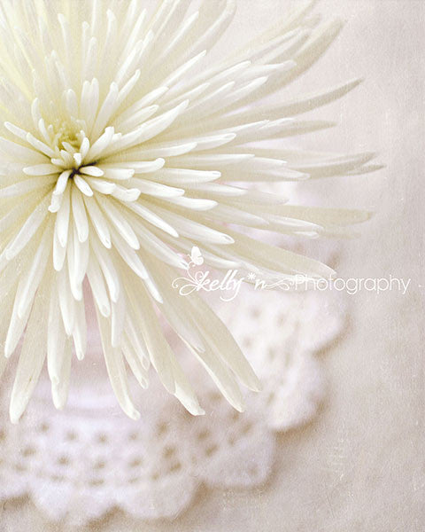 LP White Mum- Floral Still Life Photo - Kelly*N Photography - 1